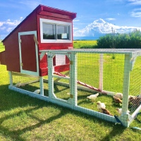 Luxury Chicken Tractor on a BUDGET