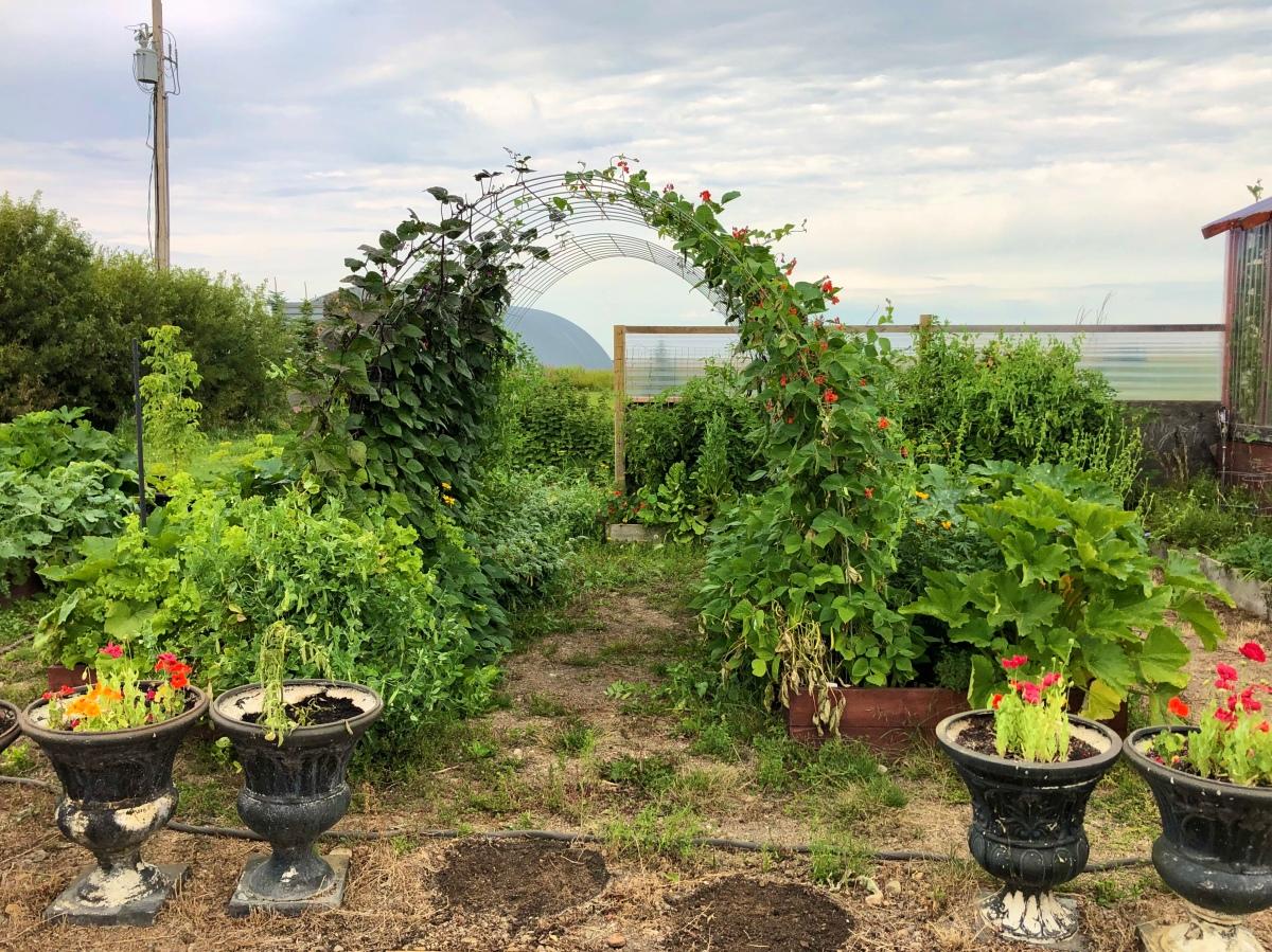 Arched Garden Trellis DIYBuild