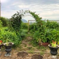 Arched Garden Trellis DIY Build